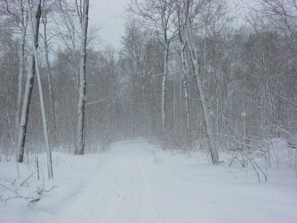 A snow covered road in the trees.